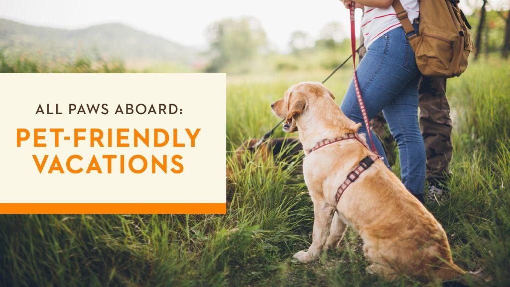 5 Big Reasons To Opt For Pet-friendly Vacations